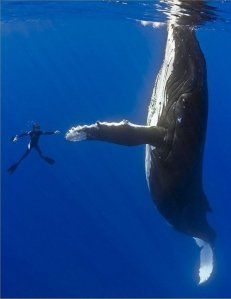 shaking-hands-with-a-whale