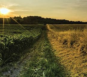 AB İlerleme Raporu – Gıda güvenliği, hayvan ve bitkisağlığı