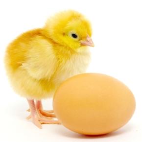 """""""Tavuk-yumurta"""" paradoksunun rekabet hukukundaki görünümü: hakim durum ve hakim durumun kötüyekullanılması"""